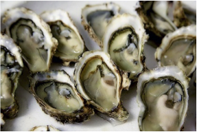 food-oysters