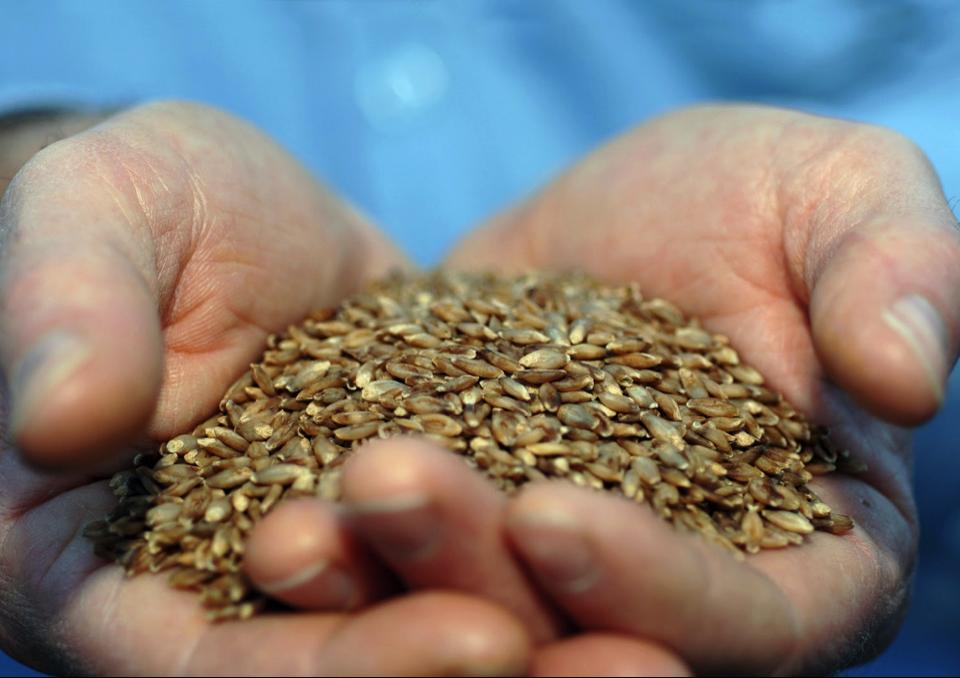food-grains-in-hand