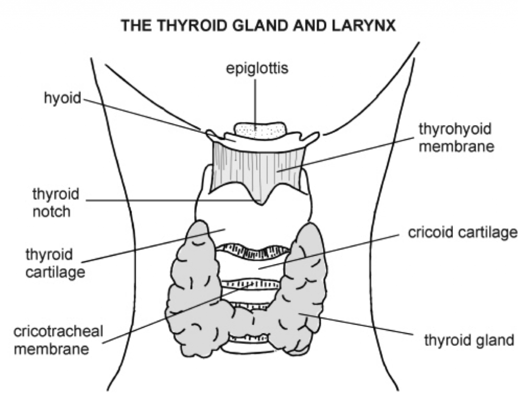 How To Test Your Thyroid: The Definitive Guide | Dr. Alan ...