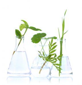 adrenal-101-herbs